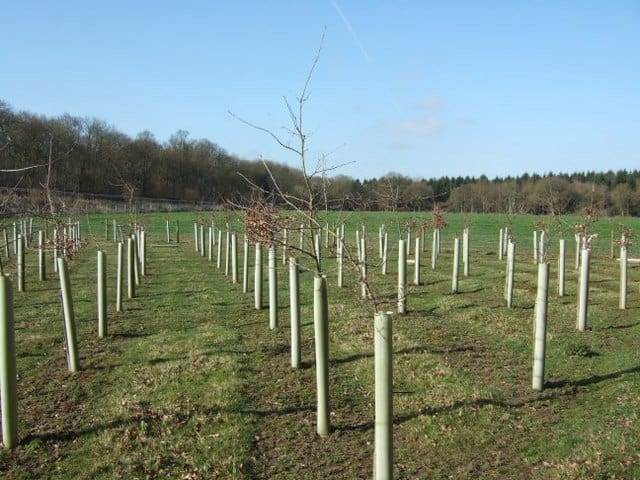 New Trees for 70th Birthday